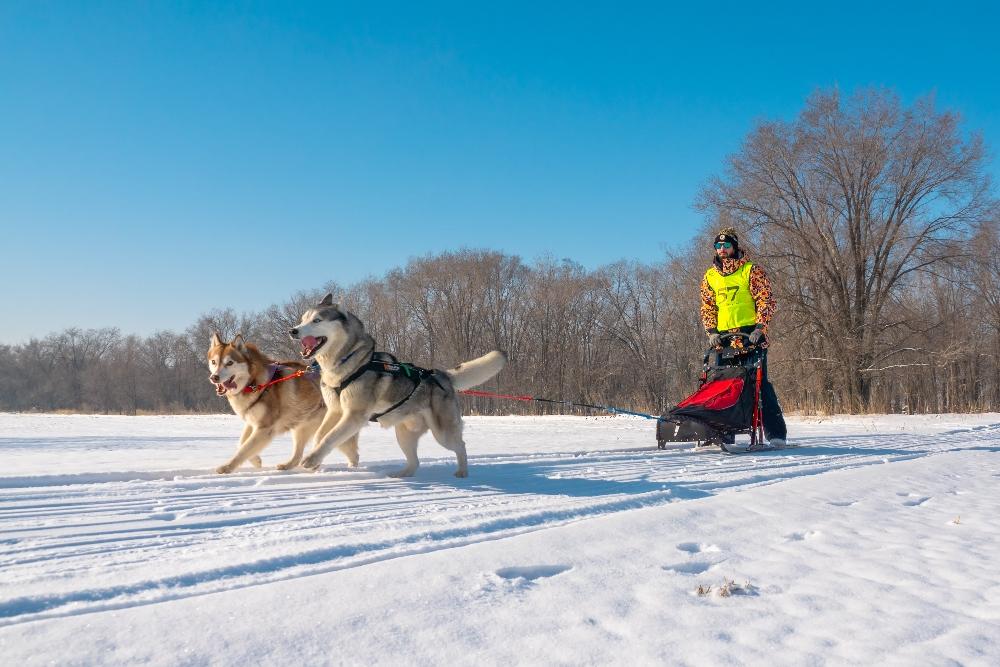 Солнце, снег, собаки и море позитива