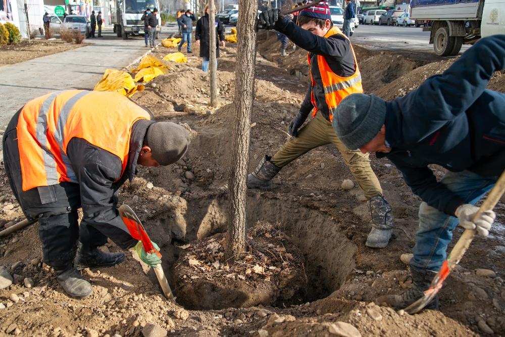 Как пытались закончить скандал с незаконно вырубленными деревьями в Алматы