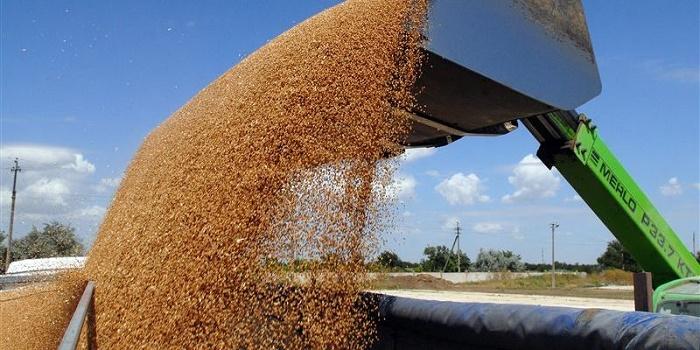 Экспорт зерна нарастает