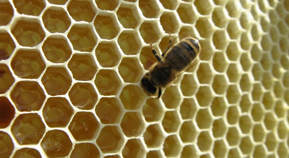 Пчеловодам дали денег на мёд