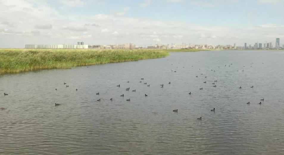 Кому хотят отдать застройку озера Малый Талдыколь