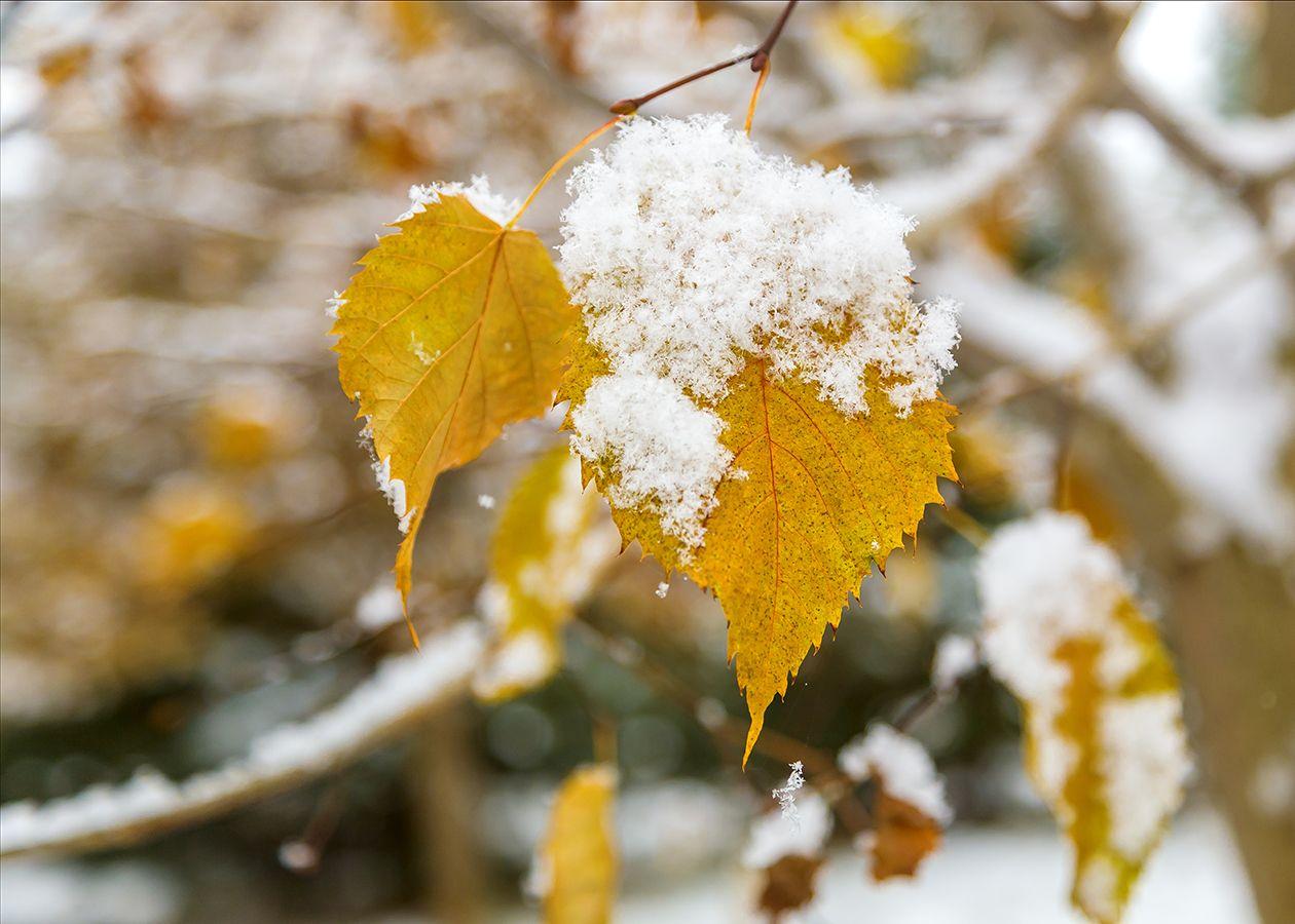 Какая погода ждет казахстанцев в ближайшие три дня