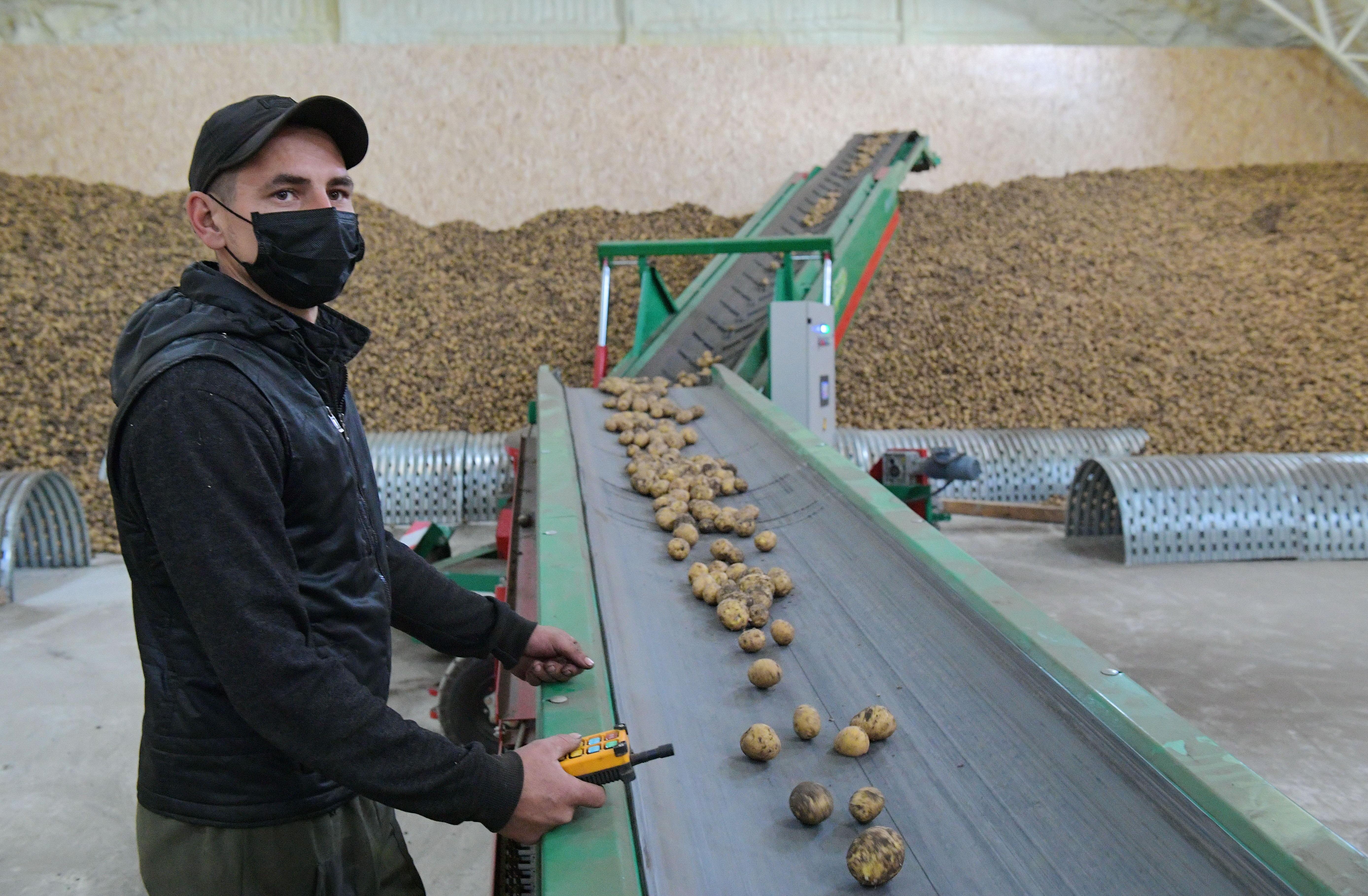 Павлодар облысы биыл да картоп көлемі бойынша рекорд орнатты