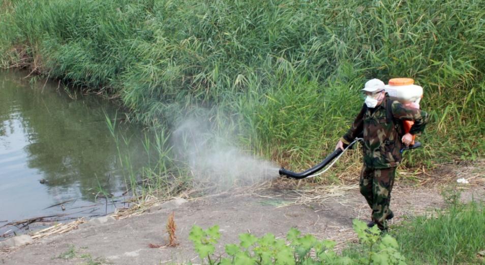 1,5 млрд тенге на борьбу с комарами направит акимат Павлодарской области