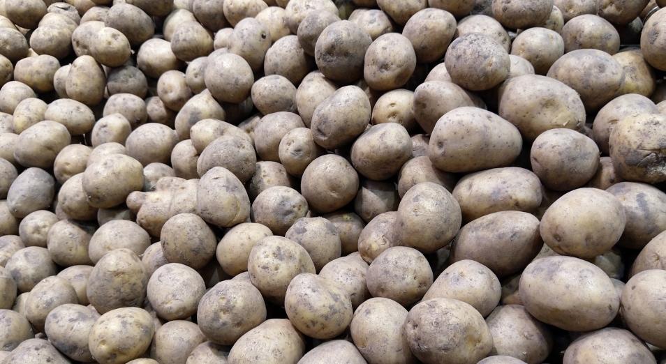 Картофель в Казахстане становится роскошью для бедных граждан