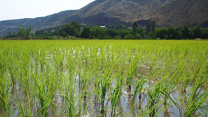 В Кызылорде почву выравнивают с помощью лазера