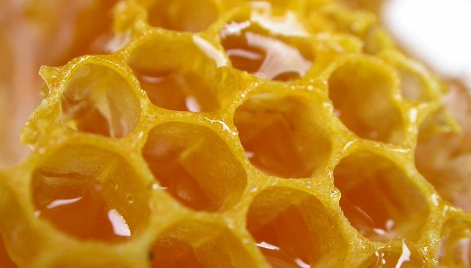 Мед и панты для алматинцев