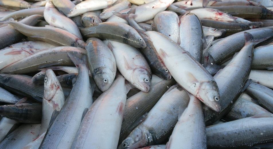 Рыба по квоте