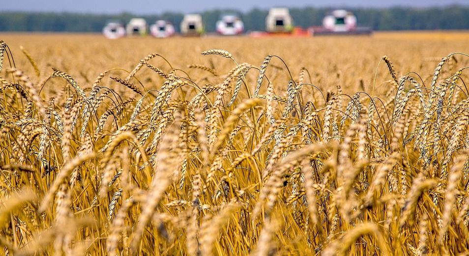 Украина собрала рекордный урожай ранних зерновых за всю свою историю