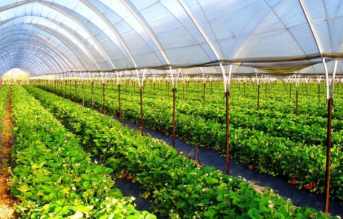 ПРООН покажет, где фрукты зимой выращивать, ПРООН ,АПК,Гульжамал Исаева,урожай