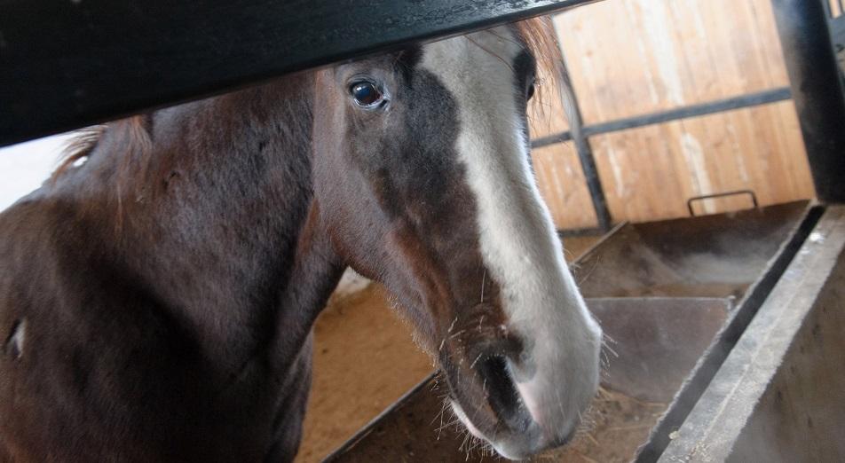 За лошадьми на ярмарку тщеславия