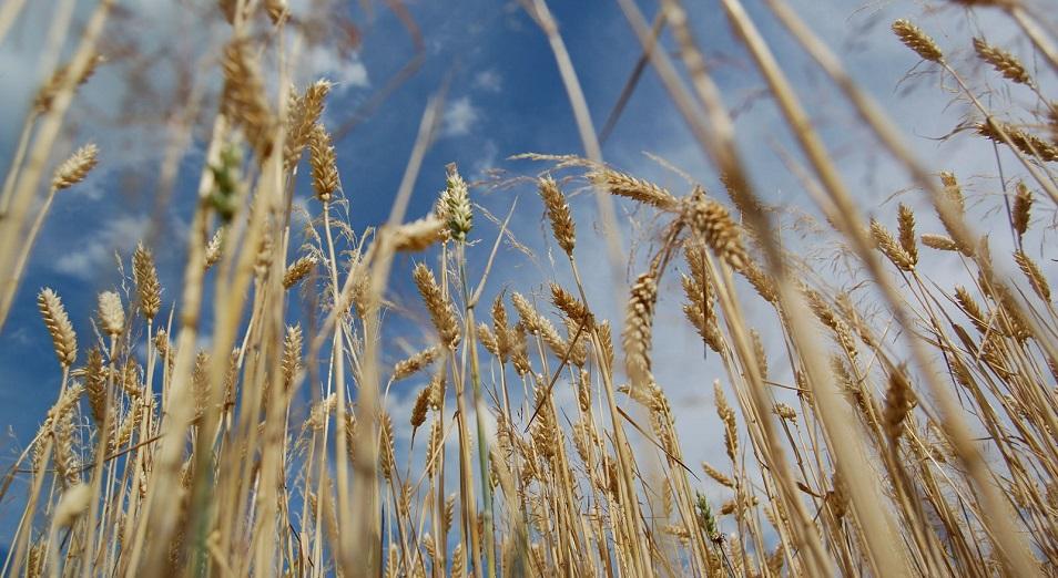 Экспорт зерна превысил традиционные параметры