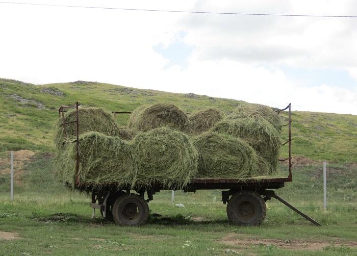 В Атыраускую область 50% кормов для скота перевезут из соседних регионов
