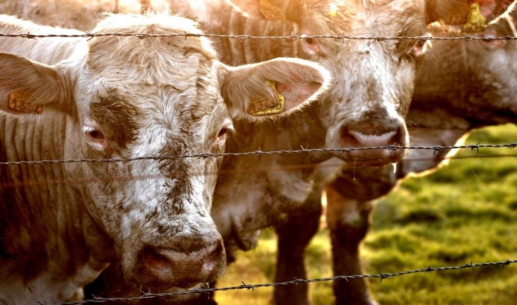 Мясо в зоне риска