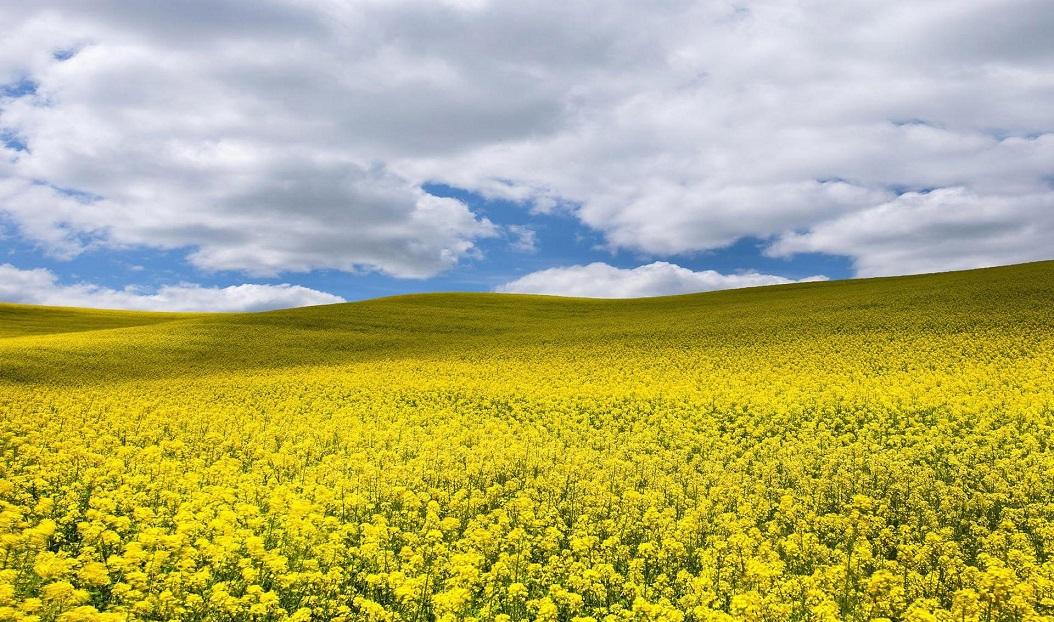 Казахский рыжик уходит на Запад, Зерновой холдинг,фермеры,элеваторы,Ербол Ташенов,зерно,Кооператив, астық