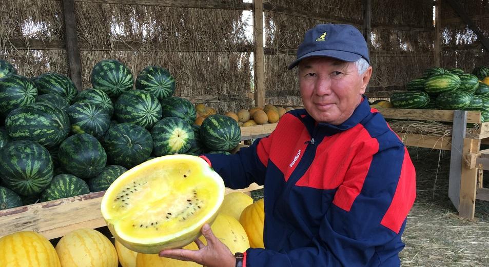 В Павлодарской области выводят новые сорта арбузов