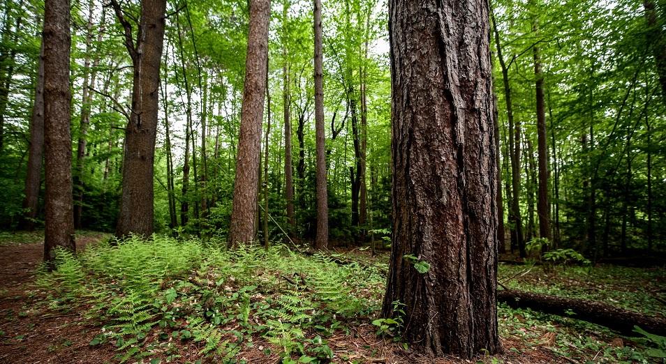 Минсельхоз хочет стать хозяином леса