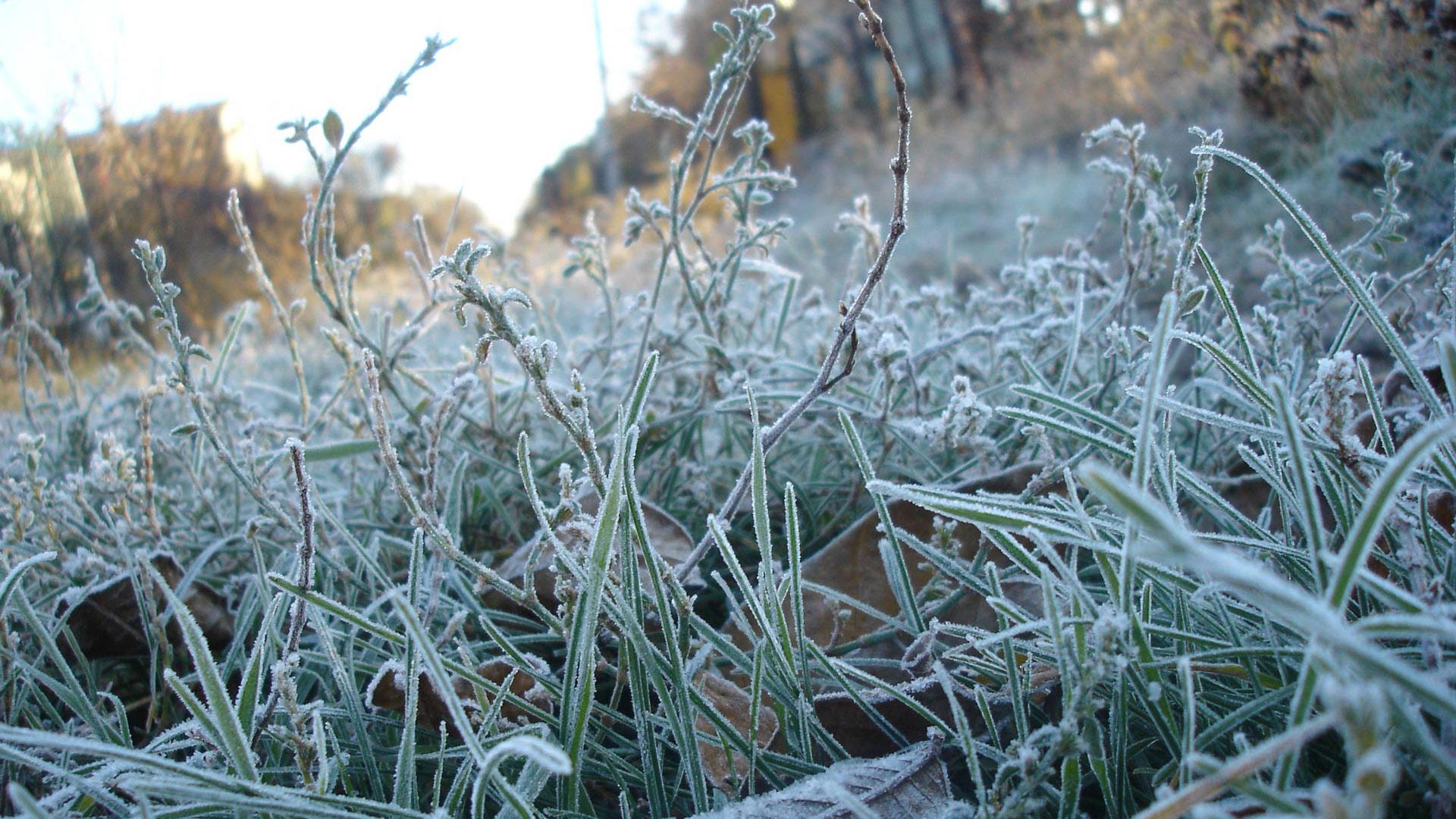 Первые заморозки ждут юг Казахстана уже на этой неделе