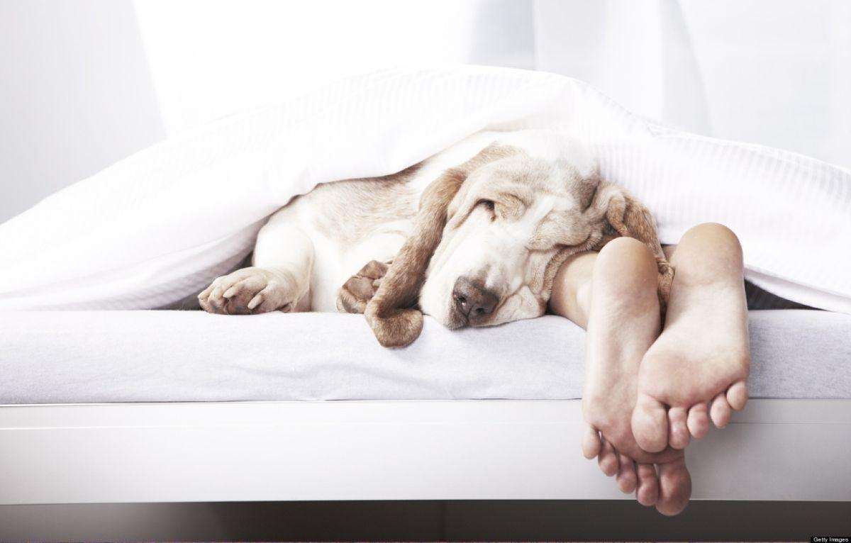 Эксперты назвали самую вредную позу для сна, эксперт, Поза, Сон