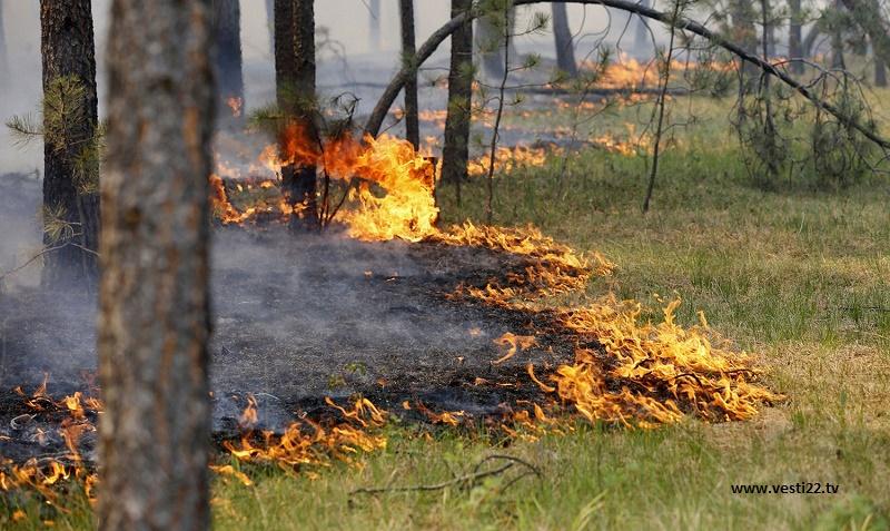 При тушении пожара в Жамбылской области погиб лесник
