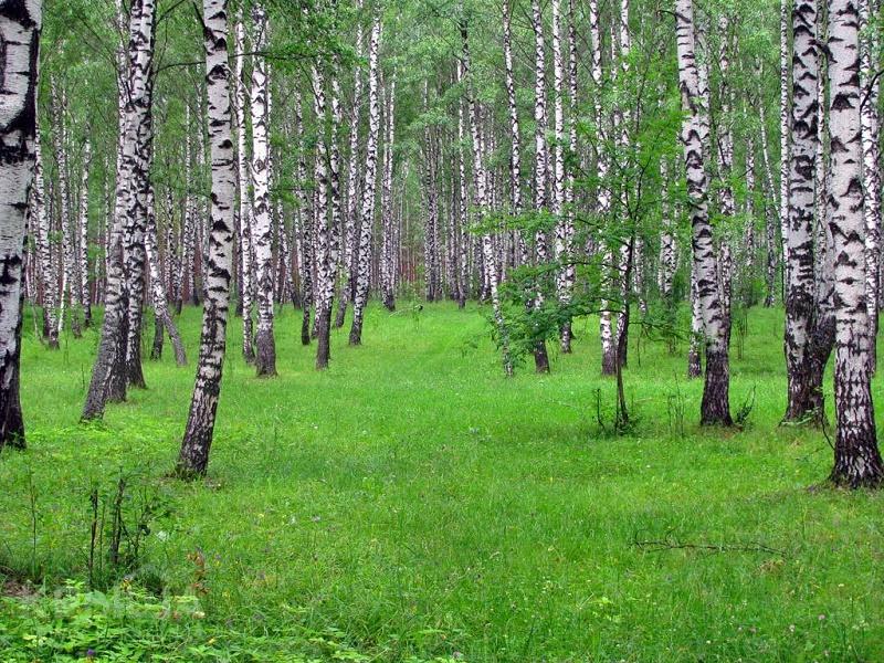 Туристский геопортал будет содержать всю информацию об Акмолинской области