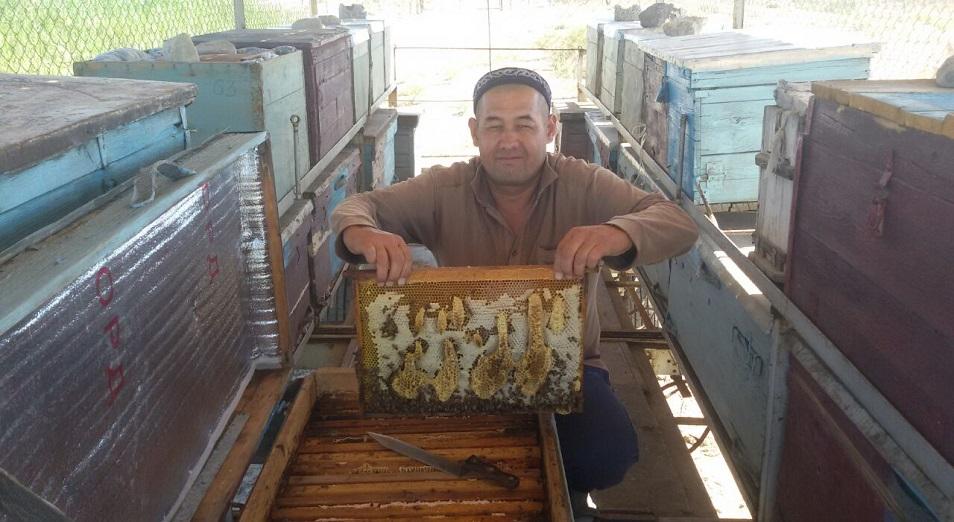 «Мал баққан қазақтың қолынан ара бағу да келеді», омарта, ара балы, Түркістан облысы, Кәсіпкер