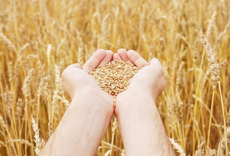 Подорожавшая пшеница не находит сбыта на ETS