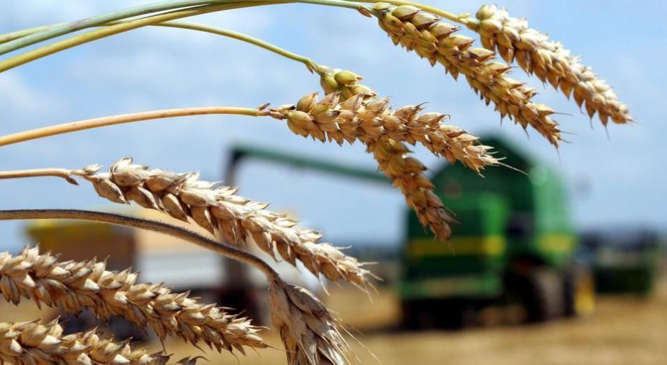 Больше полей и больше субсидий, субсидии, АПК, Фонд финансовой поддержки сельского хозяйства, КазАгро, Растениеводство, Посевная, Минсельхоз РК
