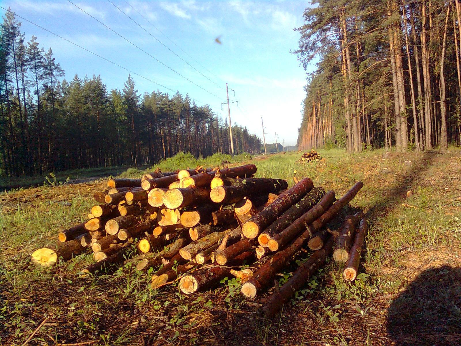 Снимки казахстанских спутников зафиксировали незаконную рубку леса в Павлодарской области