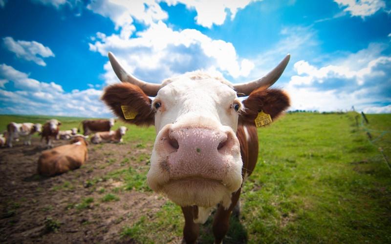 Сайт по онлайн продаже скота создала молодежь Алматинской области