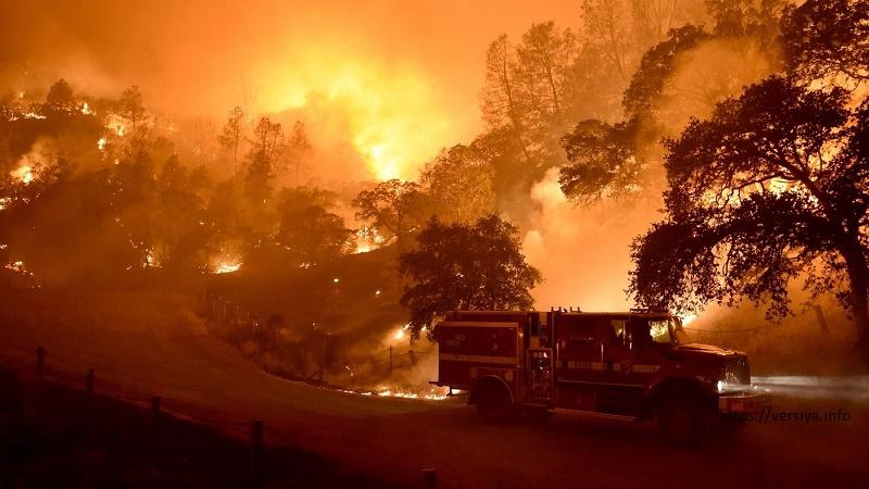 В Португалии бушуют более 20 пожаров из-за жары
