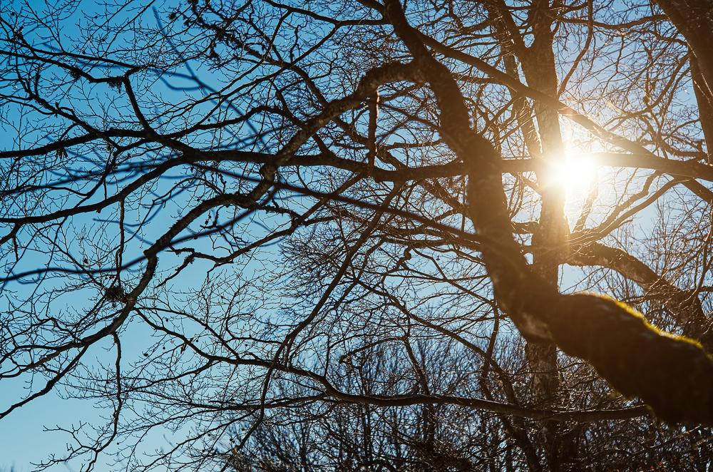 65 млн тенге выделят на создание электронной карты деревьев Караганды