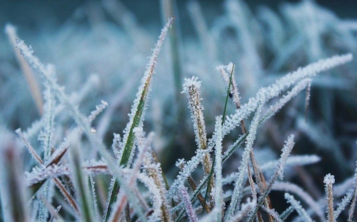На севере и в центре Казахстана ожидаются снег и заморозки