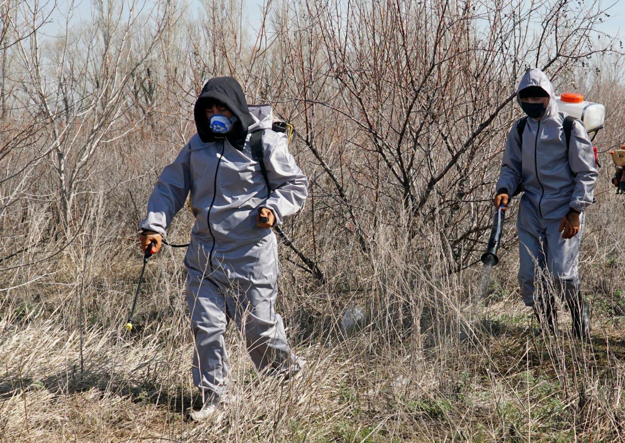 В столице дезинсекционные работы против комаров и мошек ведутся в две смены