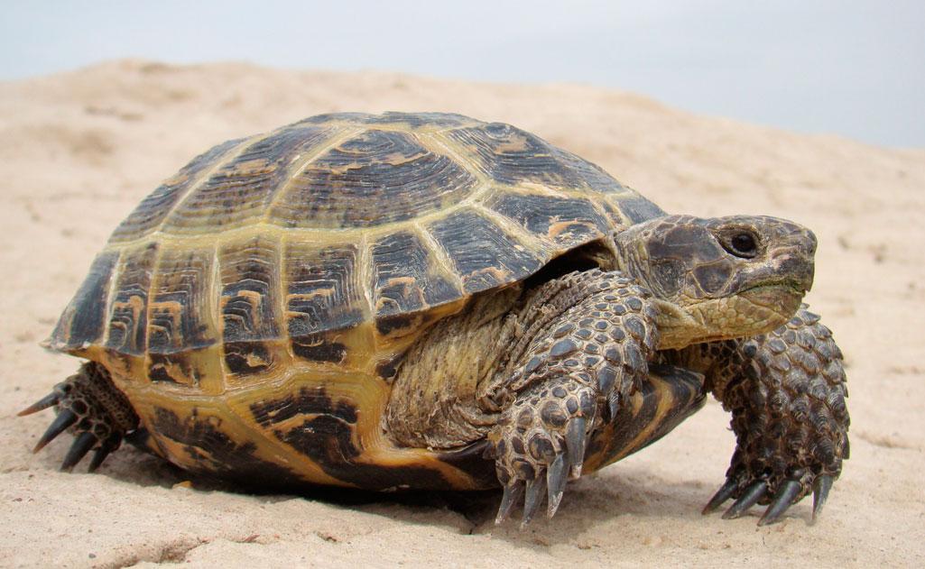 Более 4 тыс. черепах из Казахстана найдены в гараже Оренбурга