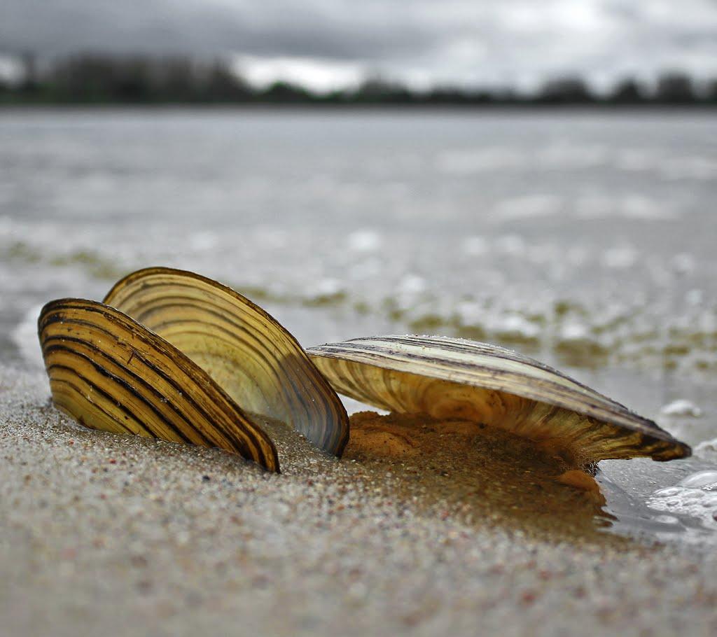 В Атырау берег городского пляжа усыпан пустыми раковинами моллюсков