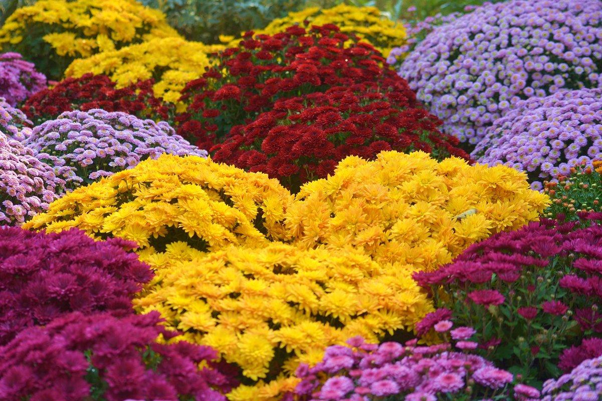 350 тысяч цветов высадят в Атырау