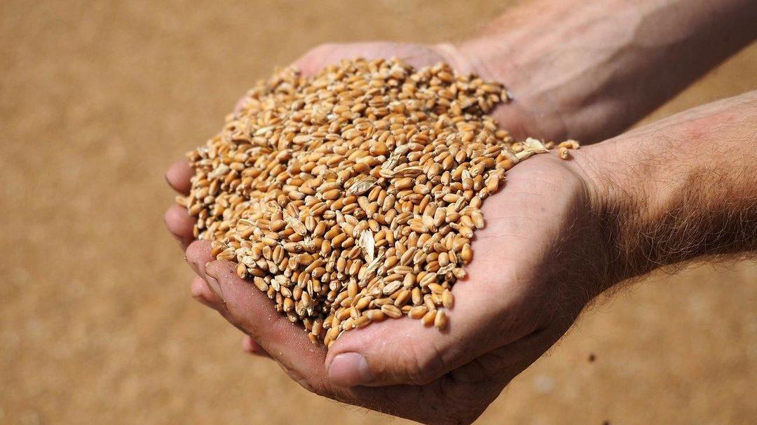 РФ в этом сельхозгоду может экспортировать в Казахстан рекордный объем зерна