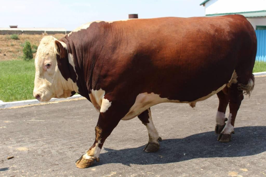 Субсидии на развитие племенного животноводства в Казахстане в 2019 году увеличились в 1,5 раза