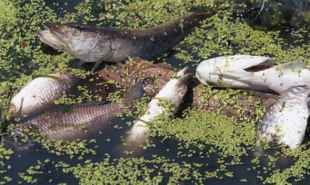 Массовая гибель рыбы произошла в ЗКО из-за ремонта шлюза