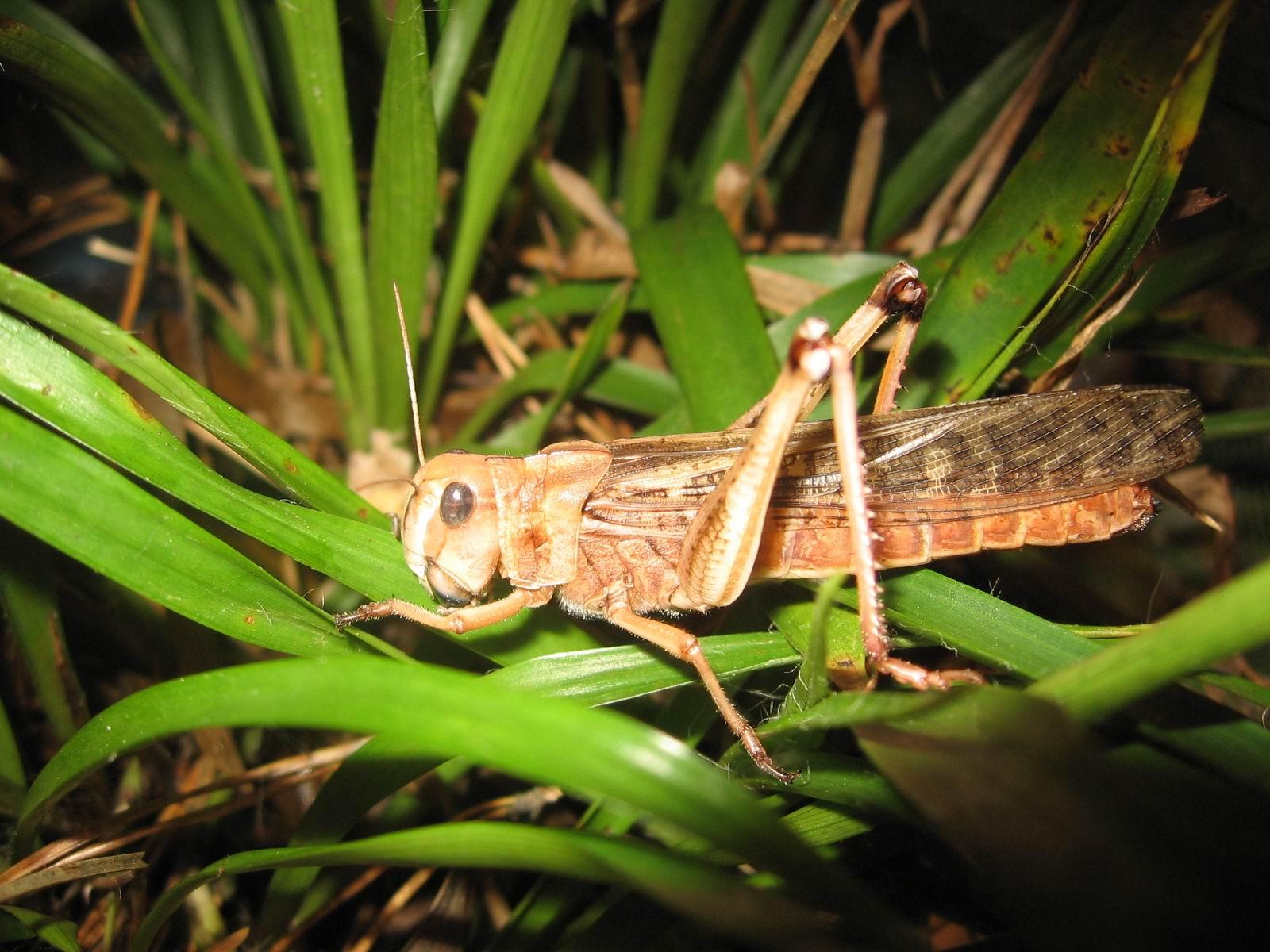 Более 184 тысяч гектаров в Жамбылской области находятся под угрозой нашествия саранчи