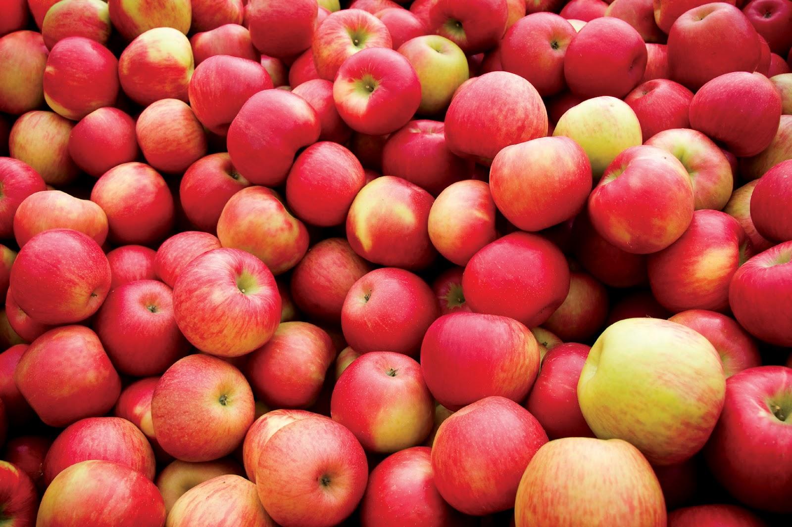 Россельхознадзор с 28 мая запретил поставки яблок с казахстанского предприятия