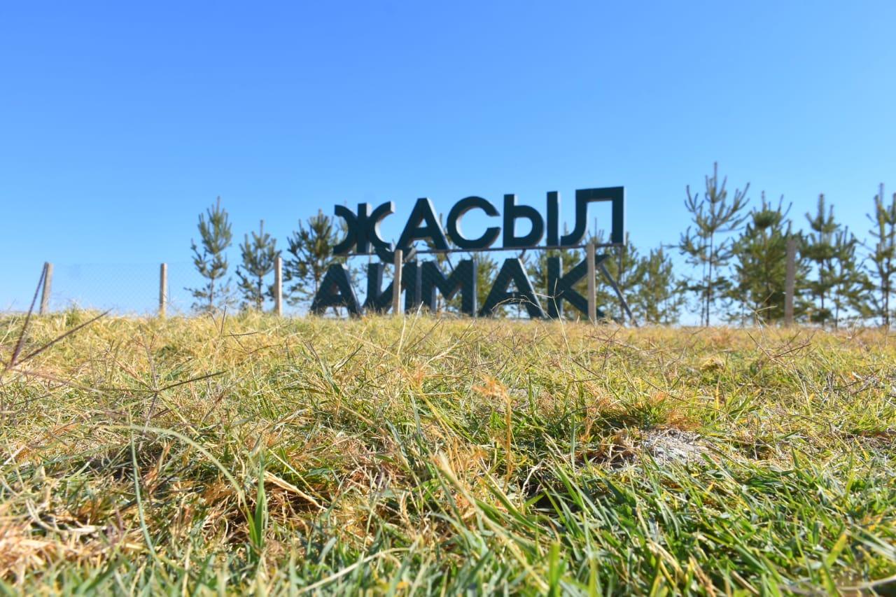 В зеленом поясе Туркестана осенью высадят 78 тысяч саженцев