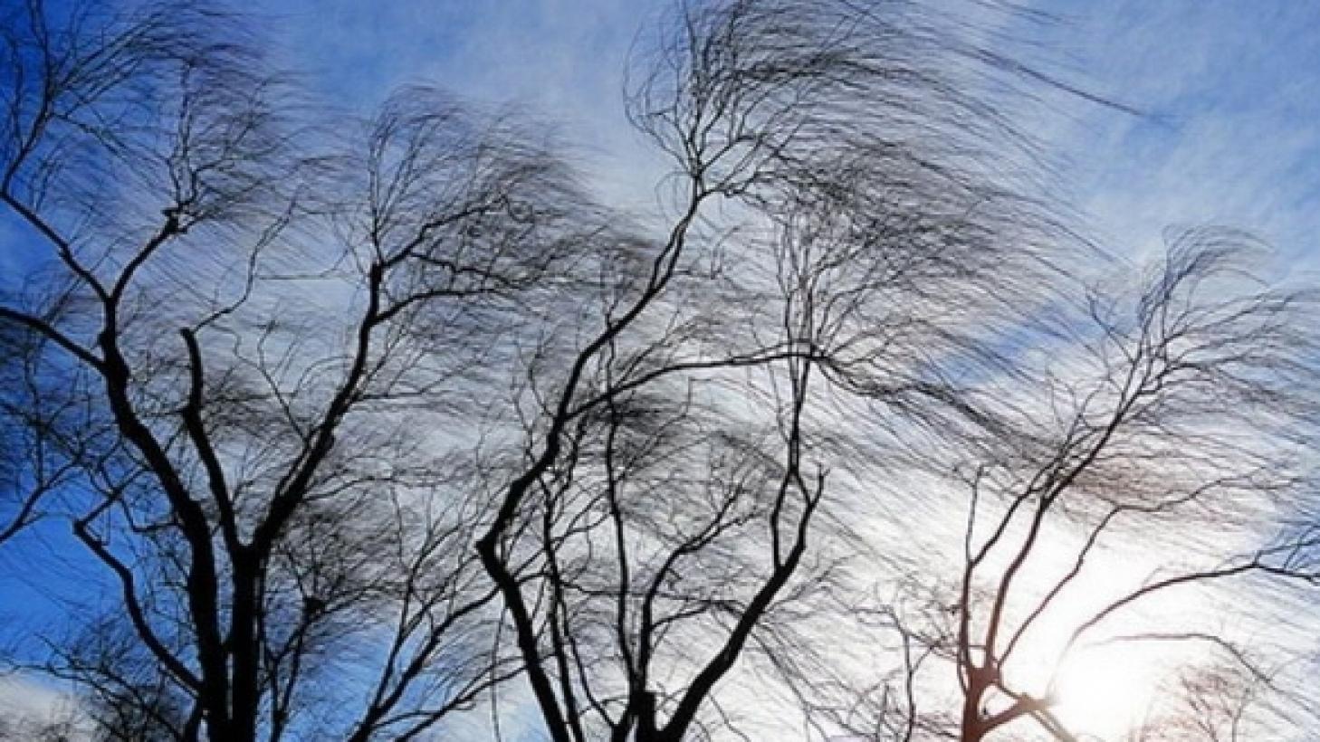 Сильный ветер ожидается в четверг в Костанайской и Туркестанской областях