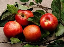 Не вызывающие аллергию яблоки растут в Казахстане