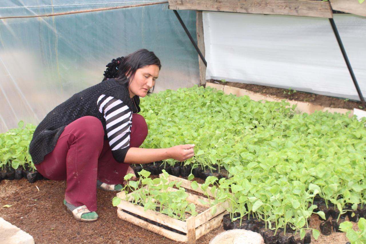 В Туркестанской области посеяно 12 тысяч гектаров бахчевых культур