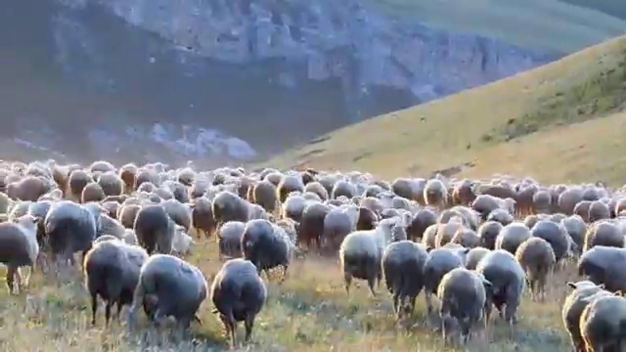 Дроны-пастухи следят за животными на фермах ЗКО