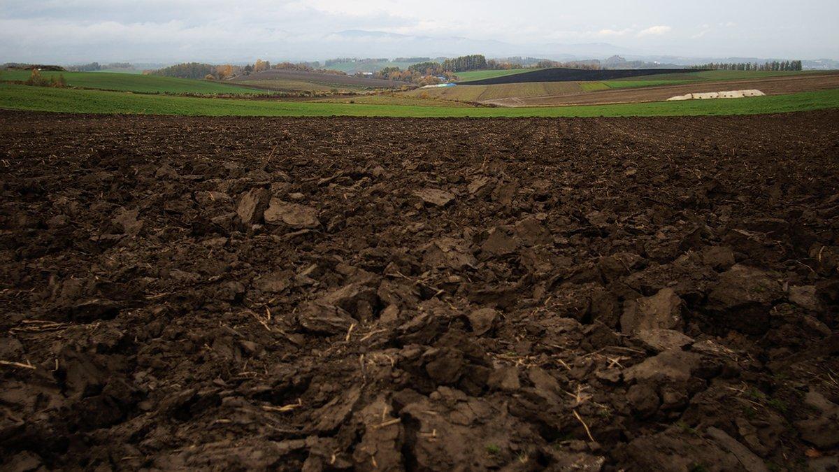 Казахстану следует до 1 июля принять закон о земле – депутат