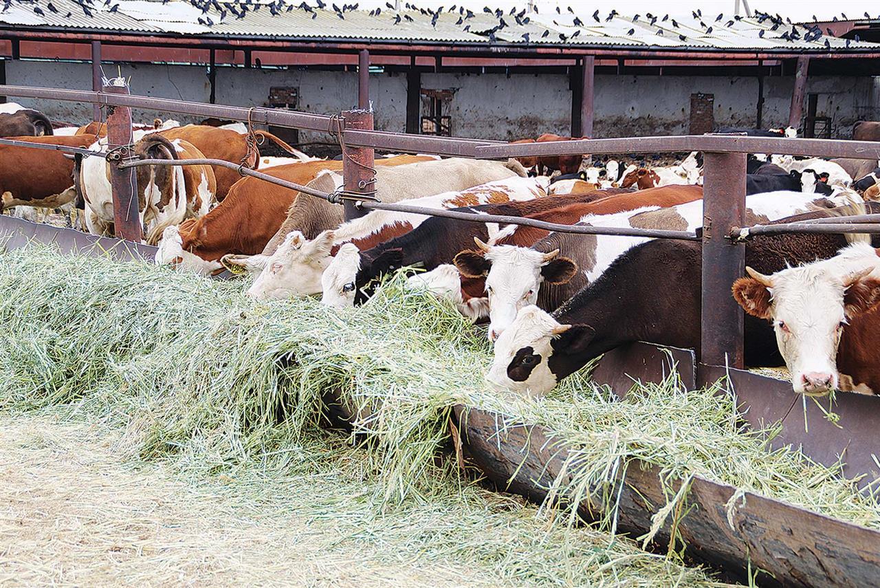 Перспективы совершенствования продуктивных качеств отечественного генофонда мясного скота