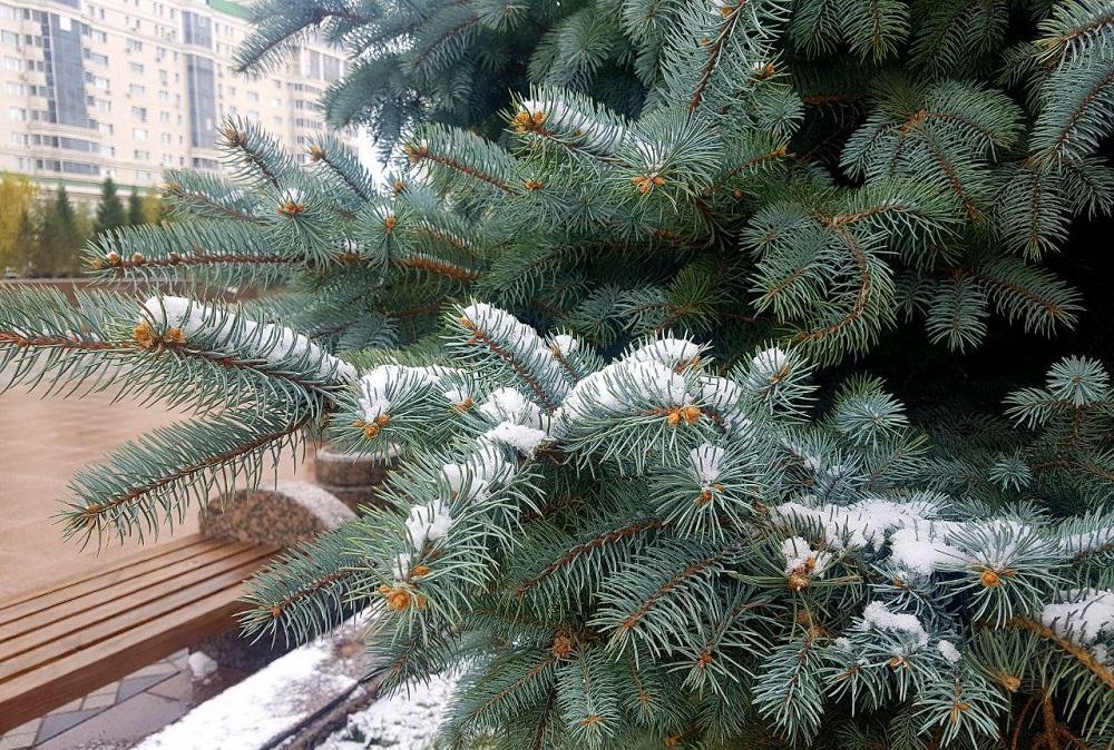 В Казахстане в предстоящие трое суток, 17-19 ноября, ослабнут морозы
